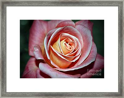 Framed Print featuring the photograph Pink Rose by Savannah Gibbs