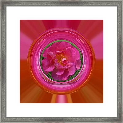 Pink Rose Series 113 Framed Print