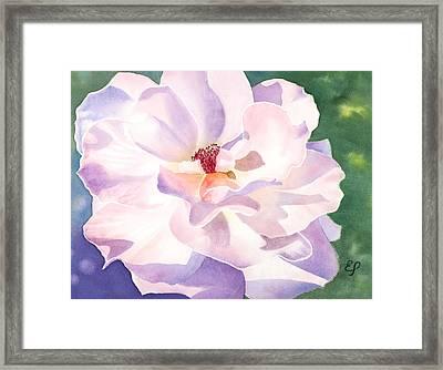 Pink Rose - Transparent Watercolor Framed Print