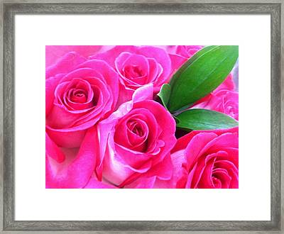 Framed Print featuring the photograph Pink Roses by Alohi Fujimoto