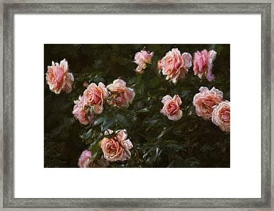 Flowers - Pink Roses Framed Print