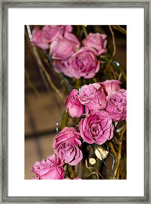 Pink Roses Framed Print by Patrice Zinck