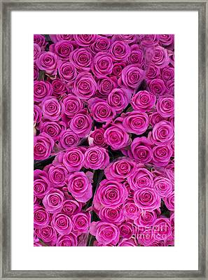 Pink Roses Framed Print by Tim Gainey
