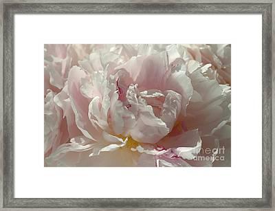 Pink Ruffles Framed Print