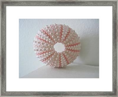 Pink Sea Urchin Still Life Framed Print by Patricia E Sundik