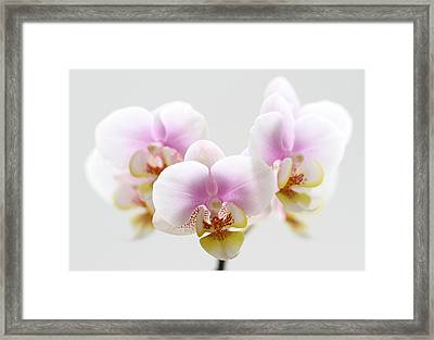 Pink Sensation Framed Print by Juergen Roth