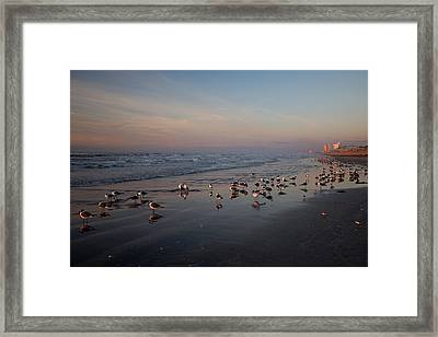 Framed Print featuring the photograph Pink by Sharon Jones