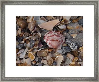 Framed Print featuring the photograph Pink Shell by Brigitte Emme