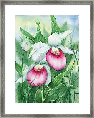 Pink Showy Lady Slippers Framed Print