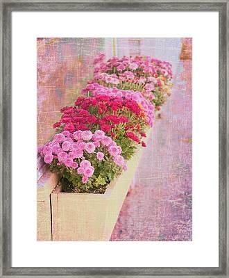 Pink Sidewalk Flowerbox Framed Print