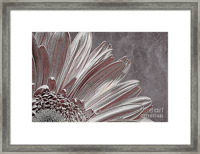 Pink Silver Framed Print by Lois Bryan