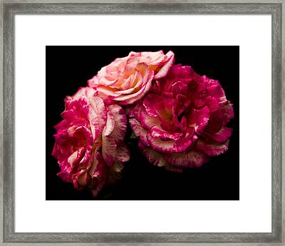 Framed Print featuring the photograph Pink Solitude by Theodore Jones