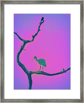 Pink Spoonbill Framed Print by David Mckinney