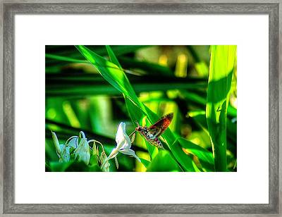 Pink Spotted Hawk Moth Framed Print