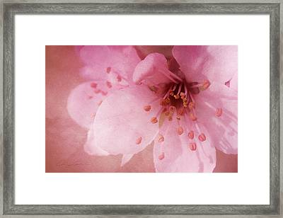 Pink Spring Blossom Framed Print by Ann Lauwers