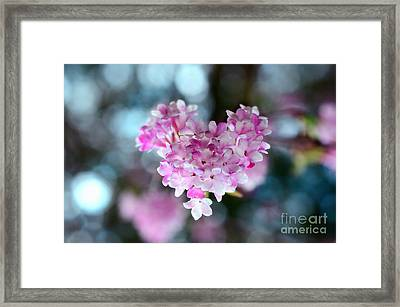 Pink Spring Heart Framed Print by Sabine Jacobs
