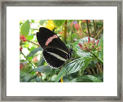 Pink Stripe Framed Print by Jennifer Wheatley Wolf