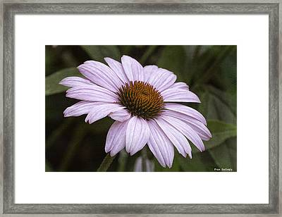Pink Summers Framed Print