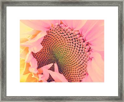 Pink Sunflower Framed Print by Marianna Mills
