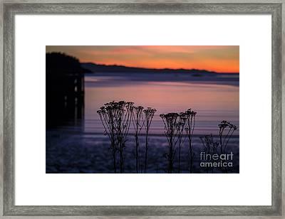 Pink Sunset Framed Print by Arlene Sundby