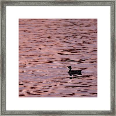 Pink Sunset With Duck In Silhouette Framed Print by Marianne Campolongo
