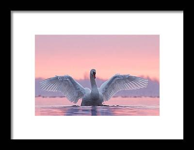 Bird By Bird Framed Prints
