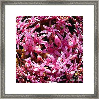 Pink Swirl. Framed Print by James Rabiolo