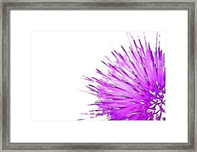 Pink Thistle  Framed Print by Rich Collins