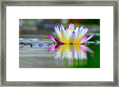 Pink Tips Emerge Framed Print