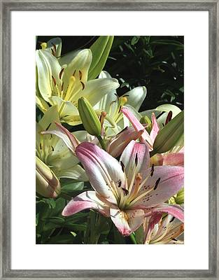 Pink To White  Framed Print