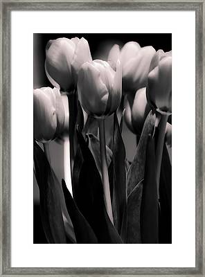 Framed Print featuring the photograph Pink Toned Tulips by Craig Perry-Ollila