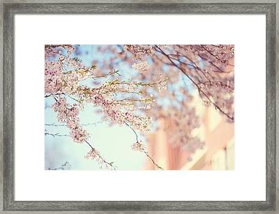 Pink Touch Of Softness. Pink Spring In Amsterdam Framed Print by Jenny Rainbow