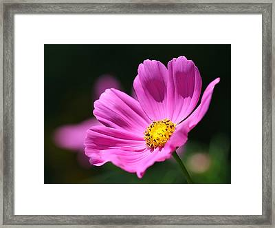 Pink Framed Print by Tracy Male