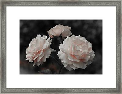 Framed Print featuring the photograph Pink Trio by Michelle Joseph-Long