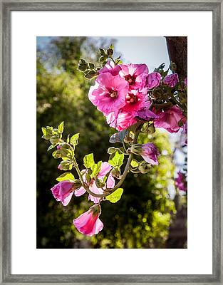 Pink Trumpet Framed Print by April Reppucci