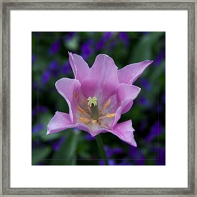 Pink Tulip Flower With A Spot Of Green Fine Art Floral Photography Print Framed Print