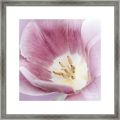 Pink Tulip Macro Framed Print by Elena Elisseeva