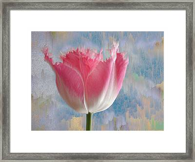 Pink Tulip Framed Print by Mark Greenberg