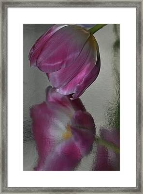 Pink Tulip Reflected In Silver Water Framed Print