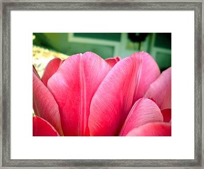 Pink Tulips Framed Print by Elizabeth Fredette
