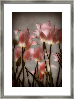 Pink Tulips Glow Framed Print by Michelle Joseph-Long