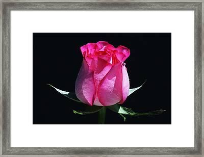 Framed Print featuring the photograph Pink Upstart by Doug Norkum
