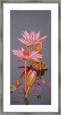 Pink Water Lilies Framed Print by Marna Edwards Flavell
