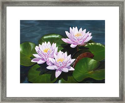 Pink Water Lilies - Oil Painting On Canvas Framed Print