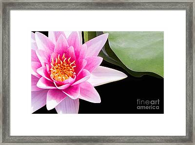 Pink Water Lily And Pad Framed Print
