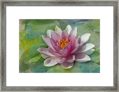 Pink Water Lily Framed Print by Rebecca Cozart