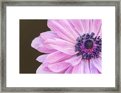 Pink Waves Framed Print by Caitlyn  Grasso
