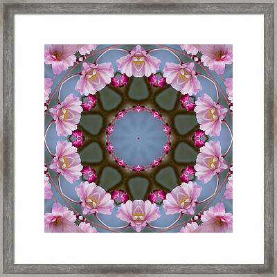 Pink Weeping Cherry Blossom Kaleidoscope Framed Print by Kathy Clark