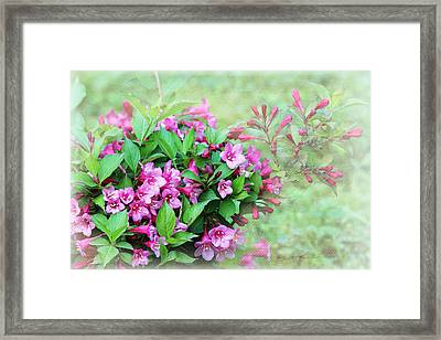 Framed Print featuring the photograph Pink Weigela by Trina  Ansel