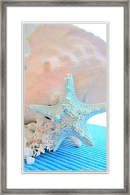 Pink White And Blue Conch And Sea Shells  Framed Print by Danielle  Parent